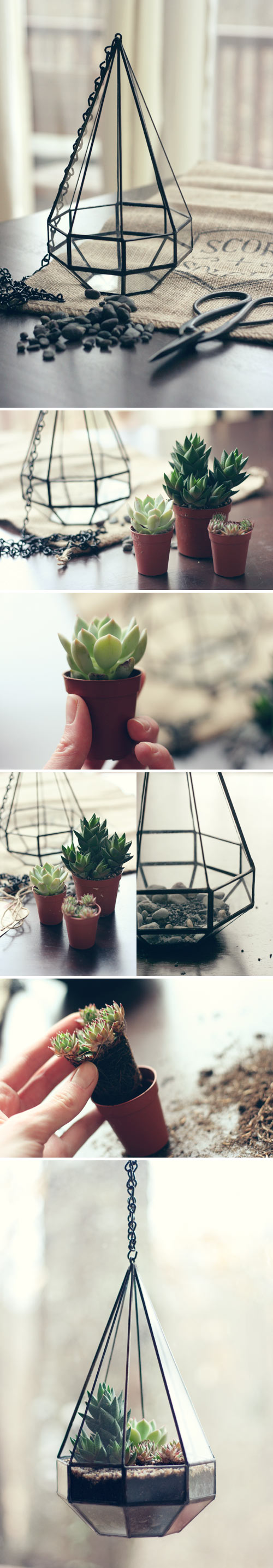 DIY Terrario decorativo